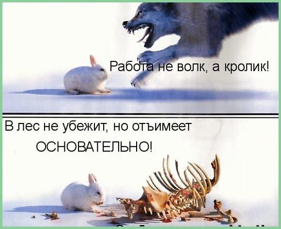 Открытки работа не волк в лес, открытки дню